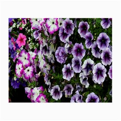 Flowers Blossom Bloom Plant Nature Small Glasses Cloth (2-Side)