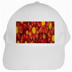 Flowers Nature Plants Autumn Affix White Cap