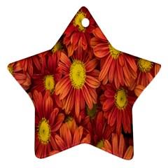 Flowers Nature Plants Autumn Affix Ornament (Star)