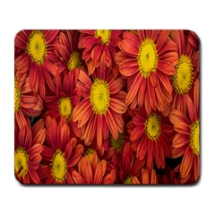 Flowers Nature Plants Autumn Affix Large Mousepads