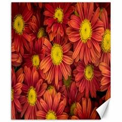 Flowers Nature Plants Autumn Affix Canvas 20  x 24