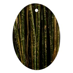 Green And Brown Bamboo Trees Ornament (Oval)