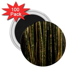 Green And Brown Bamboo Trees 2.25  Magnets (100 pack)