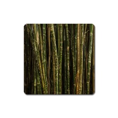 Green And Brown Bamboo Trees Square Magnet