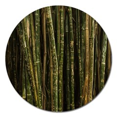 Green And Brown Bamboo Trees Magnet 5  (Round)