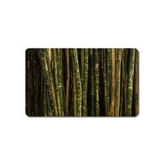 Green And Brown Bamboo Trees Magnet (name Card)