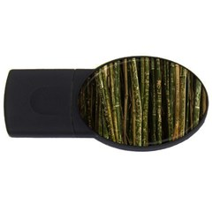 Green And Brown Bamboo Trees USB Flash Drive Oval (2 GB)