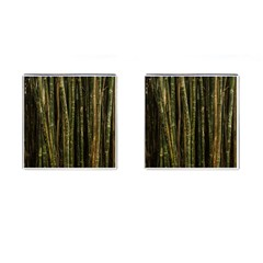 Green And Brown Bamboo Trees Cufflinks (Square)