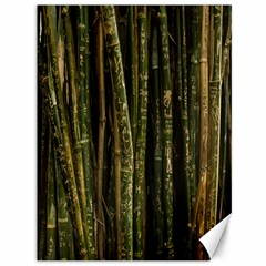 Green And Brown Bamboo Trees Canvas 36  x 48