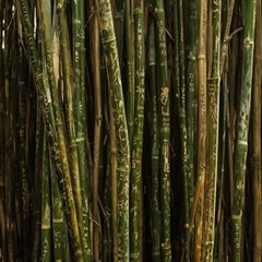 Green And Brown Bamboo Trees Magic Photo Cubes