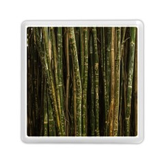 Green And Brown Bamboo Trees Memory Card Reader (Square)