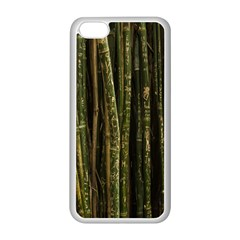 Green And Brown Bamboo Trees Apple iPhone 5C Seamless Case (White)