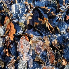 Frost Leaves Winter Park Morning Magic Photo Cubes