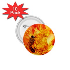 Honey Bee Takes Nectar 1.75  Buttons (10 pack)