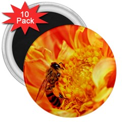 Honey Bee Takes Nectar 3  Magnets (10 pack)