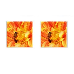 Honey Bee Takes Nectar Cufflinks (square)