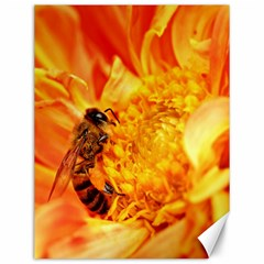 Honey Bee Takes Nectar Canvas 12  x 16