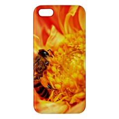 Honey Bee Takes Nectar Apple Iphone 5 Premium Hardshell Case
