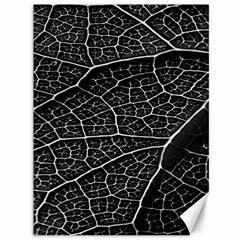 Leaf Pattern  B&w Canvas 36  x 48