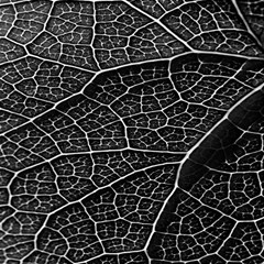 Leaf Pattern  B&w Magic Photo Cubes