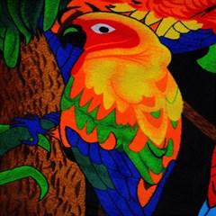 Parakeet Colorful Bird Animal Magic Photo Cubes