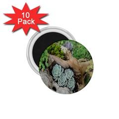 Plant Succulent Plants Flower Wood 1.75  Magnets (10 pack)