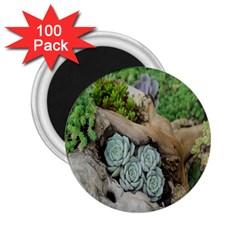Plant Succulent Plants Flower Wood 2.25  Magnets (100 pack)