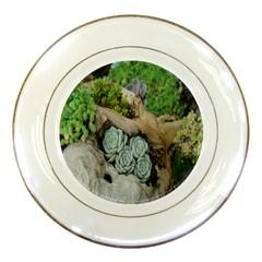 Plant Succulent Plants Flower Wood Porcelain Plates