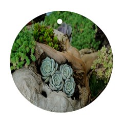 Plant Succulent Plants Flower Wood Round Ornament (two Sides)