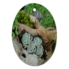 Plant Succulent Plants Flower Wood Oval Ornament (Two Sides)