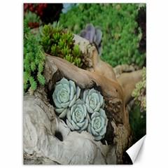 Plant Succulent Plants Flower Wood Canvas 36  x 48