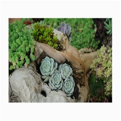 Plant Succulent Plants Flower Wood Small Glasses Cloth (2 Side)