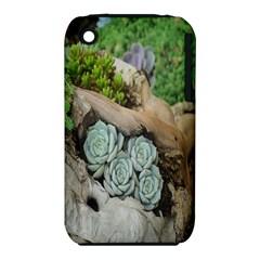 Plant Succulent Plants Flower Wood iPhone 3S/3GS
