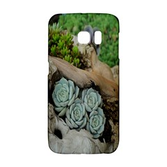 Plant Succulent Plants Flower Wood Galaxy S6 Edge