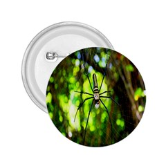 Spider Spiders Web Spider Web 2 25  Buttons
