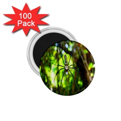 Spider Spiders Web Spider Web 1 75  Magnets (100 Pack)