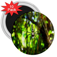 Spider Spiders Web Spider Web 3  Magnets (10 pack)