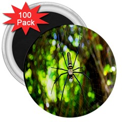 Spider Spiders Web Spider Web 3  Magnets (100 pack)