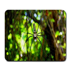 Spider Spiders Web Spider Web Large Mousepads