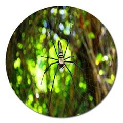 Spider Spiders Web Spider Web Magnet 5  (round)