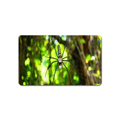 Spider Spiders Web Spider Web Magnet (Name Card)
