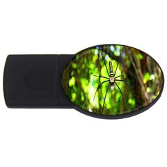 Spider Spiders Web Spider Web USB Flash Drive Oval (2 GB)