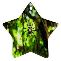 Spider Spiders Web Spider Web Star Ornament (Two Sides)