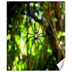 Spider Spiders Web Spider Web Canvas 8  x 10