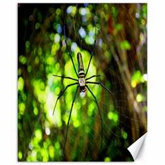 Spider Spiders Web Spider Web Canvas 16  x 20