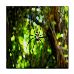 Spider Spiders Web Spider Web Face Towel