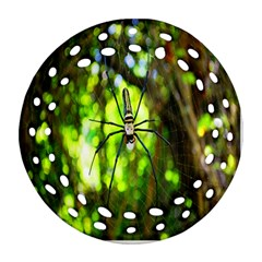 Spider Spiders Web Spider Web Round Filigree Ornament (Two Sides)