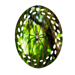 Spider Spiders Web Spider Web Oval Filigree Ornament (two Sides)
