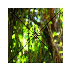 Spider Spiders Web Spider Web Acrylic Tangram Puzzle (6  X 6 )