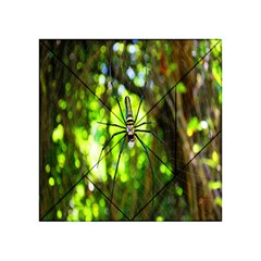 Spider Spiders Web Spider Web Acrylic Tangram Puzzle (4  x 4 )